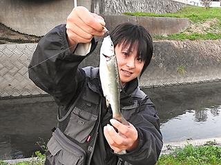 マチャ 蛭田川 ウグイ.png