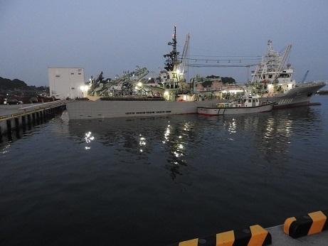 大津 港 釣り