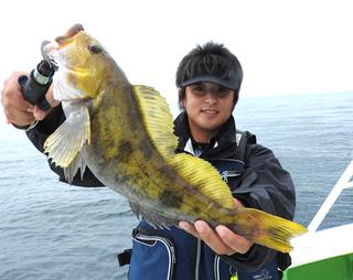 マチャ アイナメ 黄色.png